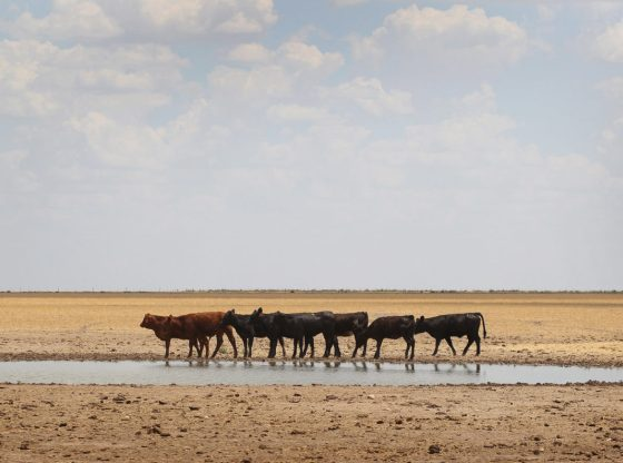 Water Crisis in the Making: Antiquated Texas Laws Meet a Hotter Climate