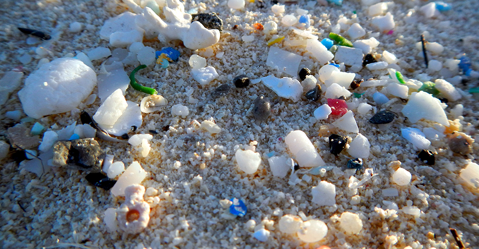 Microplastics are making their way into our food, water, air and bodies!